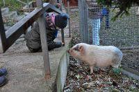 Číst dál: Návštěva domácích zvířátek